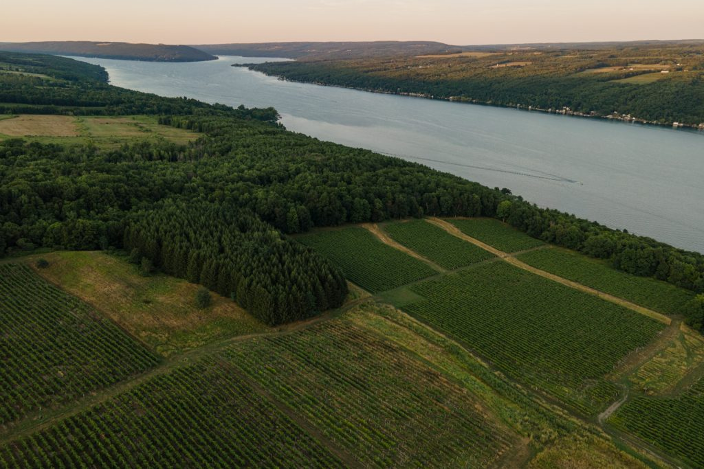 An aerial view of Keuka Lake at sunset with rows of grapevines leading up to the water. This is in the Finger Lakes region of Upstate New York.