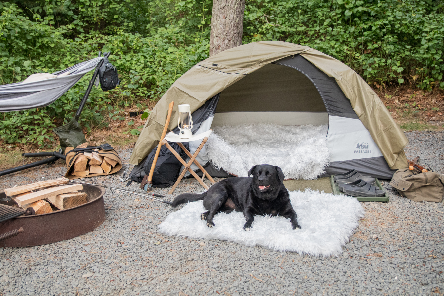 10 Pet-Friendly Campgrounds on Campspot + an Exclusive Paw.com Deal