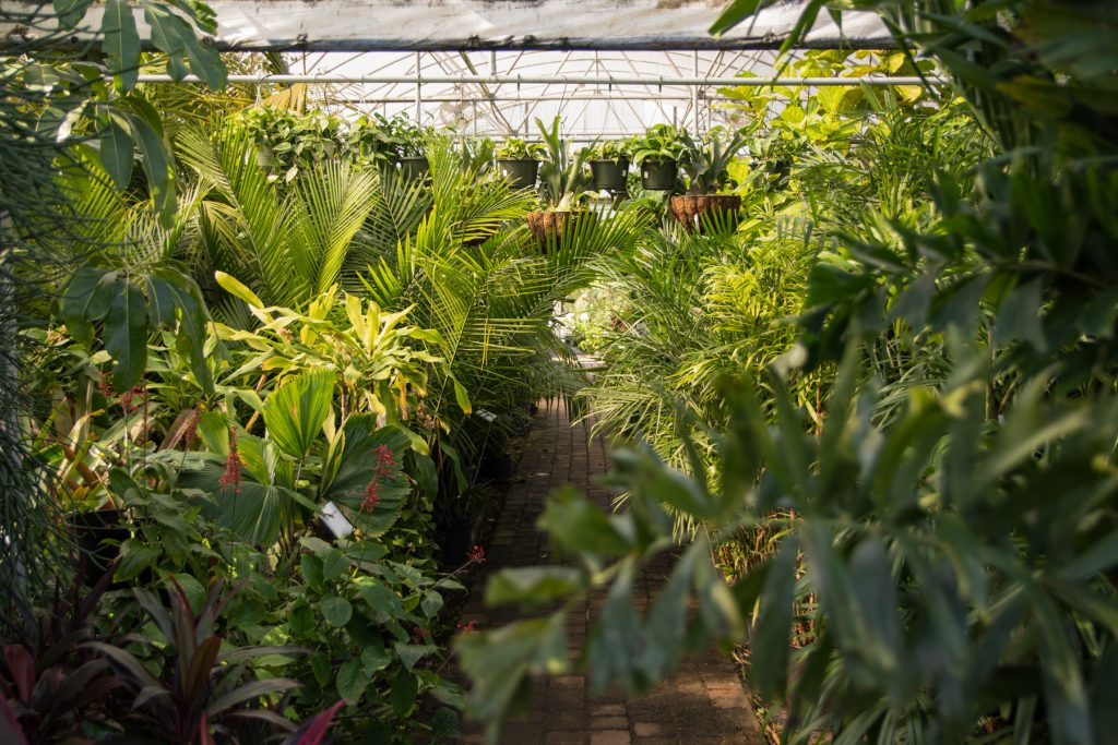 The inside of a plant nursery in St. Augustine, Florida. A brick path is surrounded by palm trees and various other types of plants.