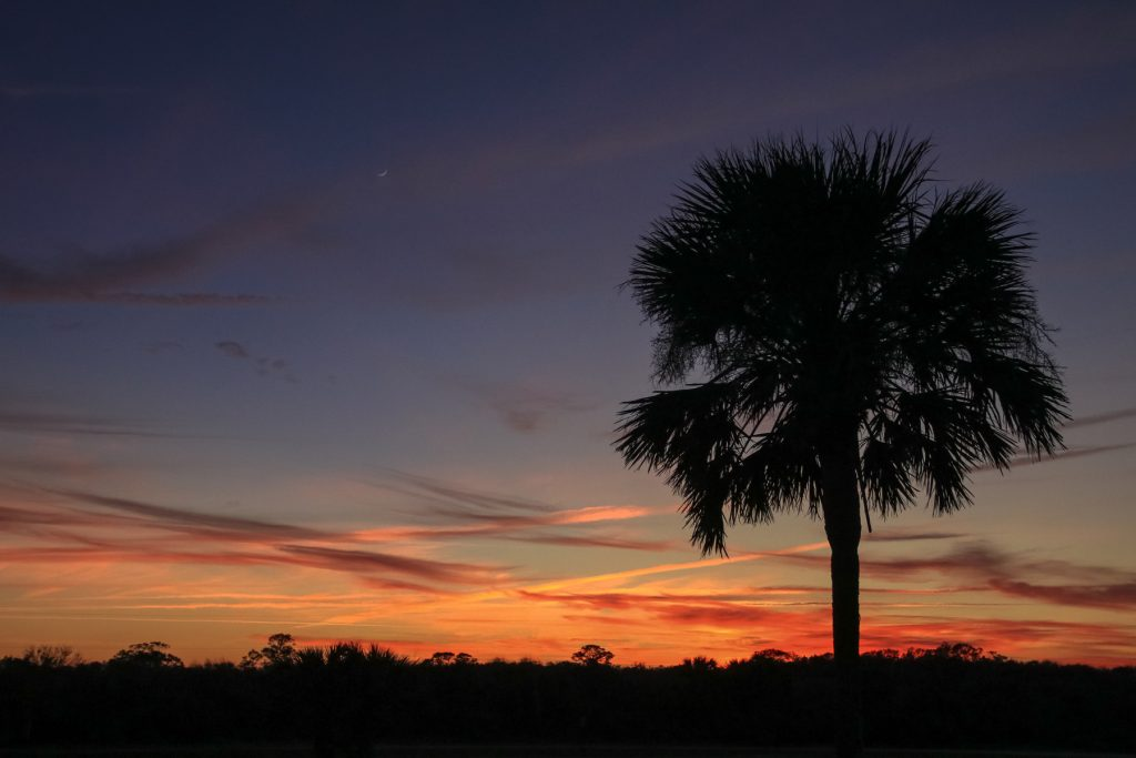 Palm tree silhouette among the Florida Sunset in Lakeland, FL.