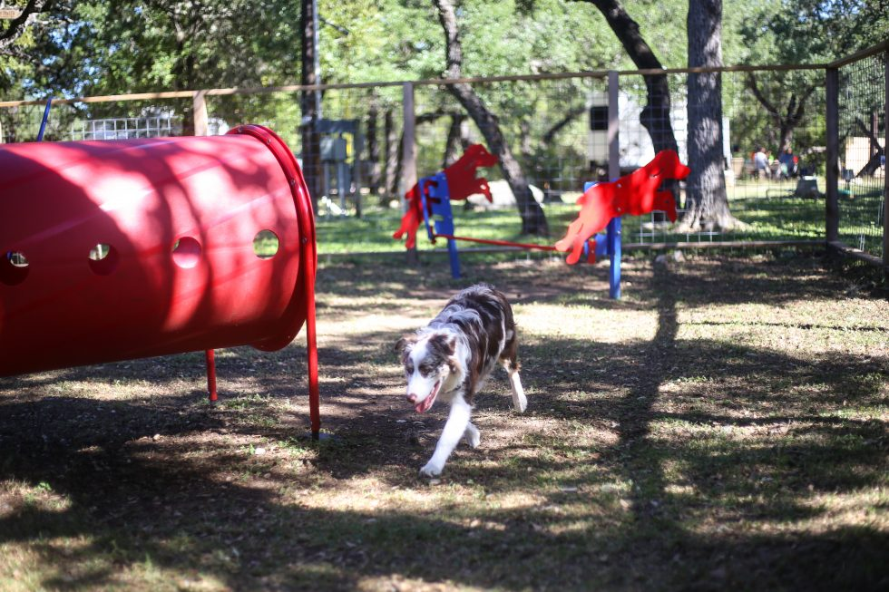 Puppy at dog park at Hill Country.