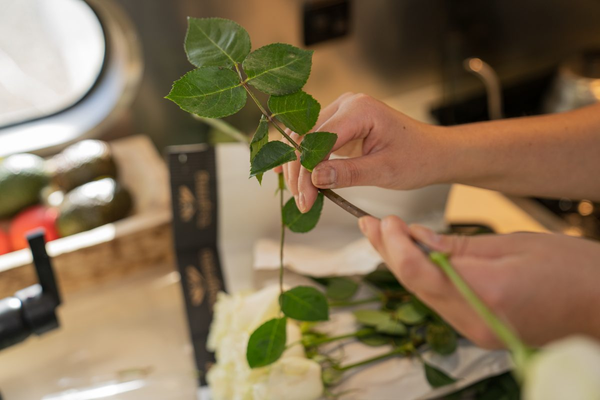 Using her hands, a woman pulls off the leaves of a rose stem.