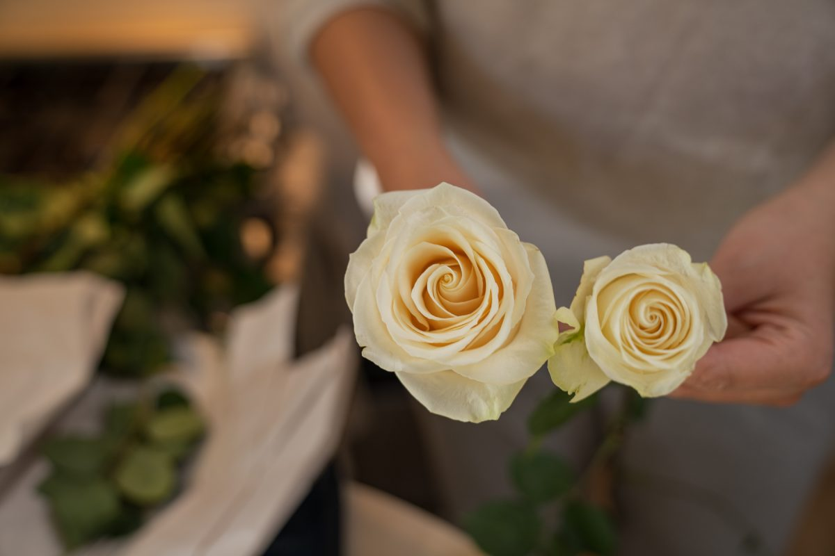 A person demonstrates the difference between a rose coming from a packaged bouquet and a rose that's been opened.