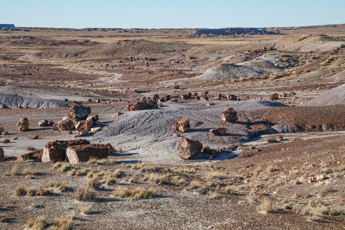 Blocks of petrified wood at Petrified Wood National Park in Arizona.