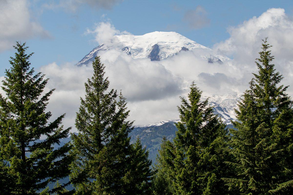 The peek of Mount Rainier poking through tall pine trees at Mount Rainier National Park in Washington.
