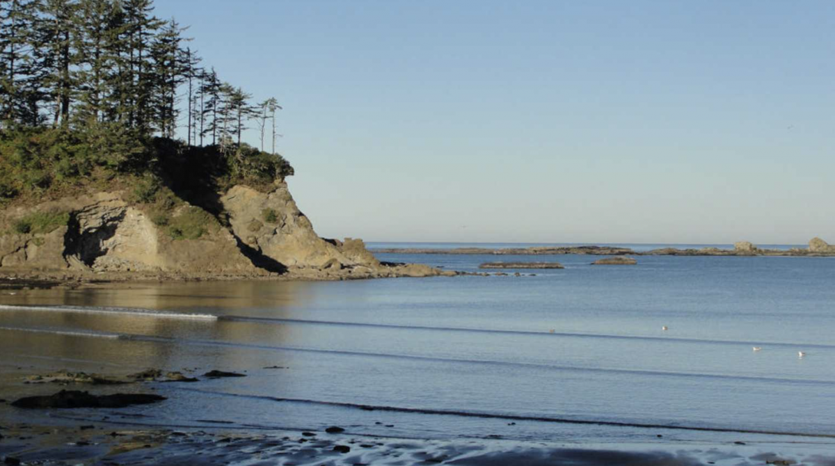 Ocean coast with bluff and trees at Oceanside RV Resort and Campground