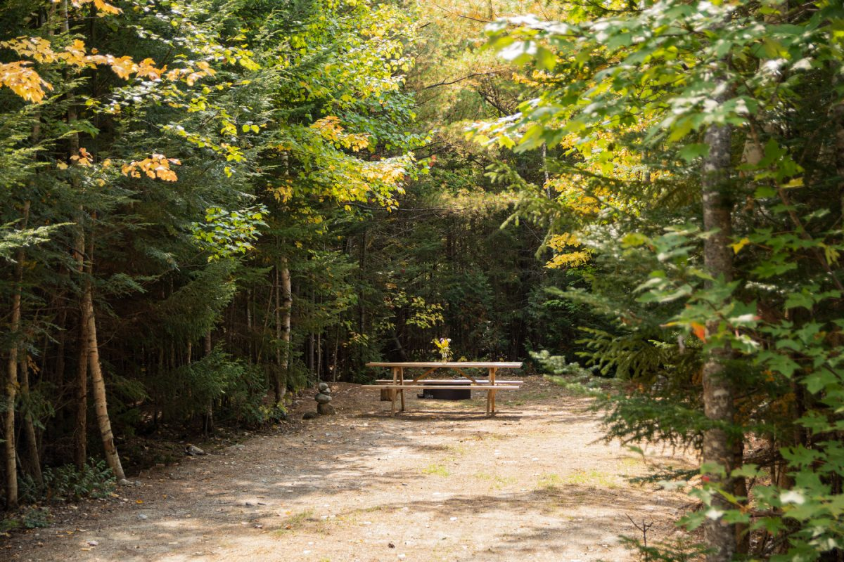 An empty wooded campsite at Wildfox Cabins & Campground in Lakeville, Maine.