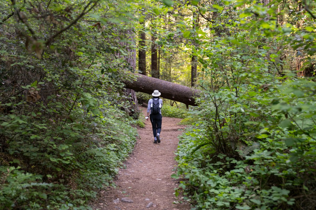 A hiker approaches a downed tree on the trail.
