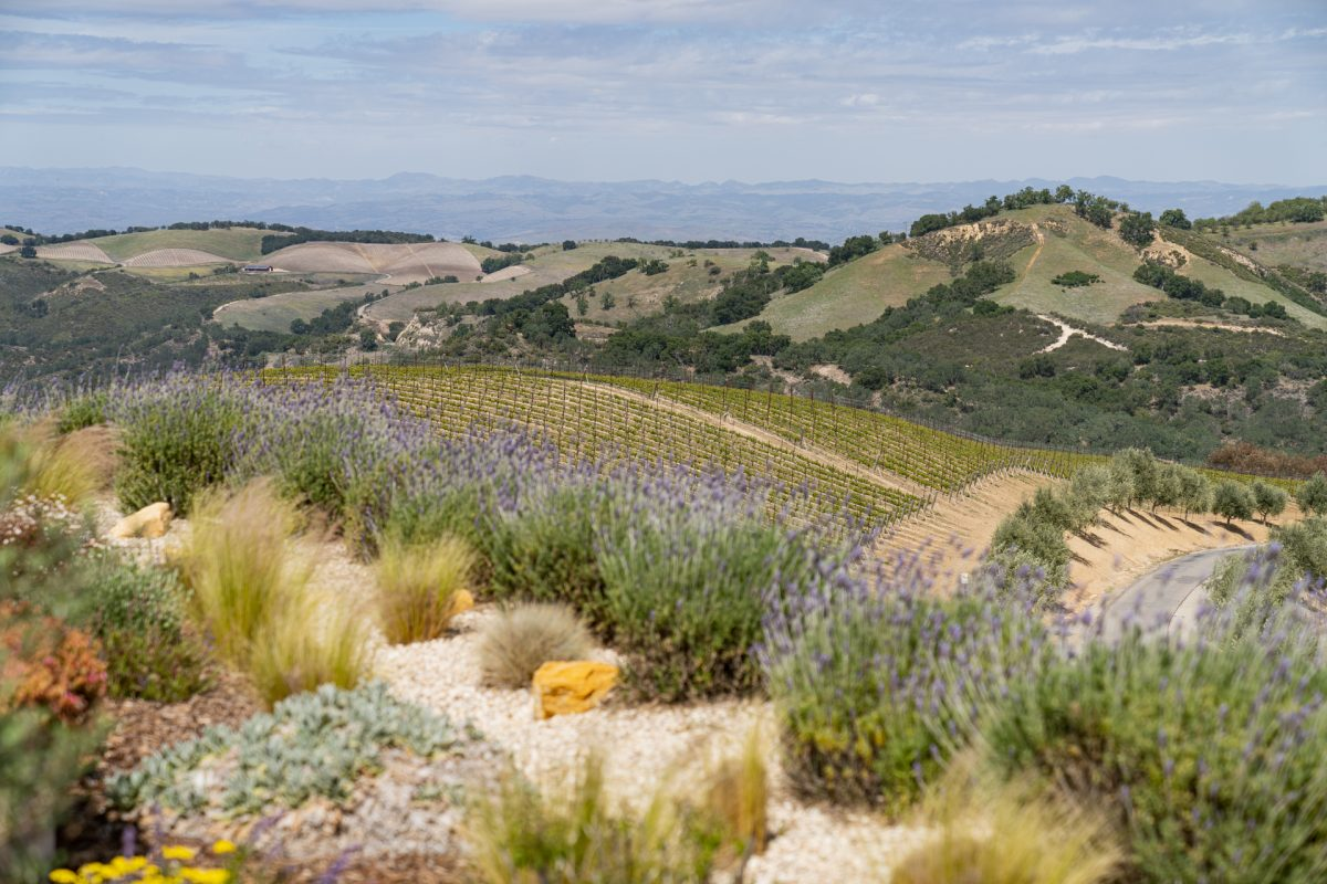 The rolling wine country hills and vineyards in Paso Robles, Califonria.