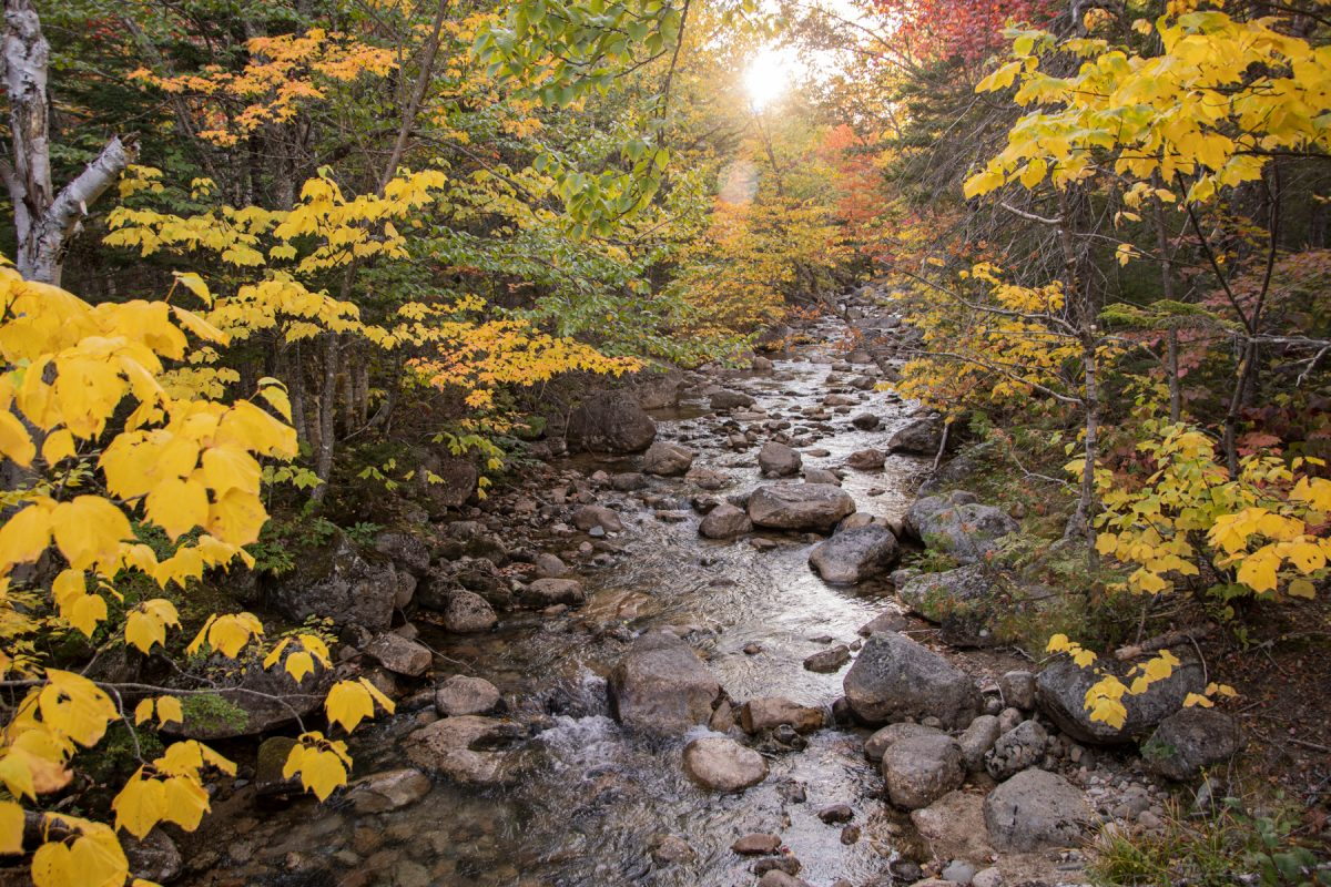 Roaring Brook in Baxter State Park in the Autumn and Fall.