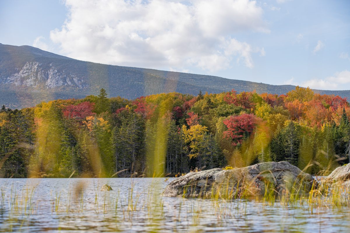 Sandy Stream Pond seen through pond grass with colorful fall trees in the back and Mt. Katahdin in Baxter State Park in Maine.