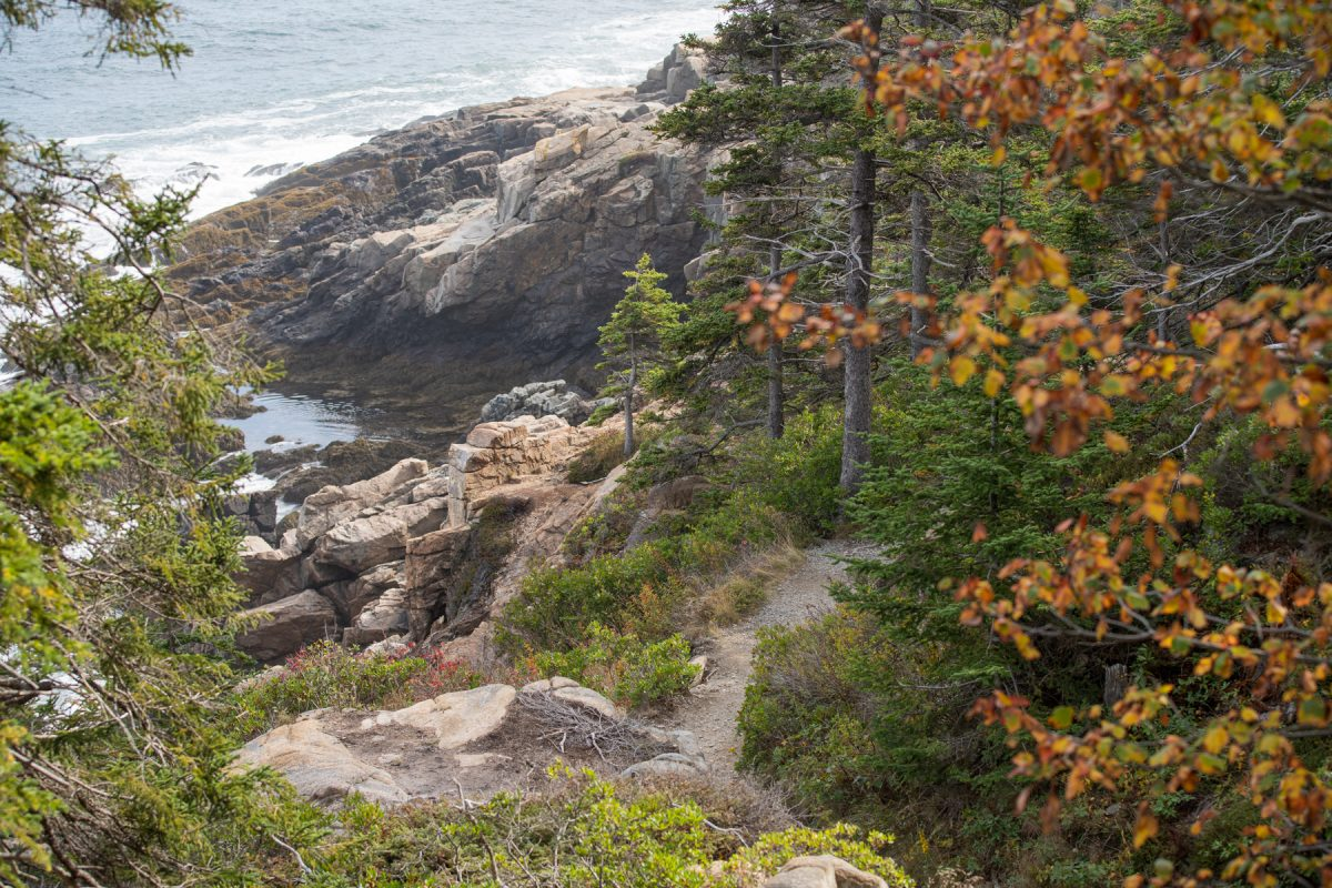 Ocean Path going along the water in Acadia National Park in Maine.